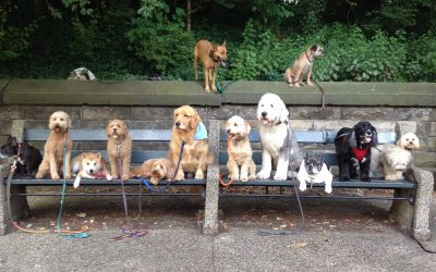 Leadershipand Dogs